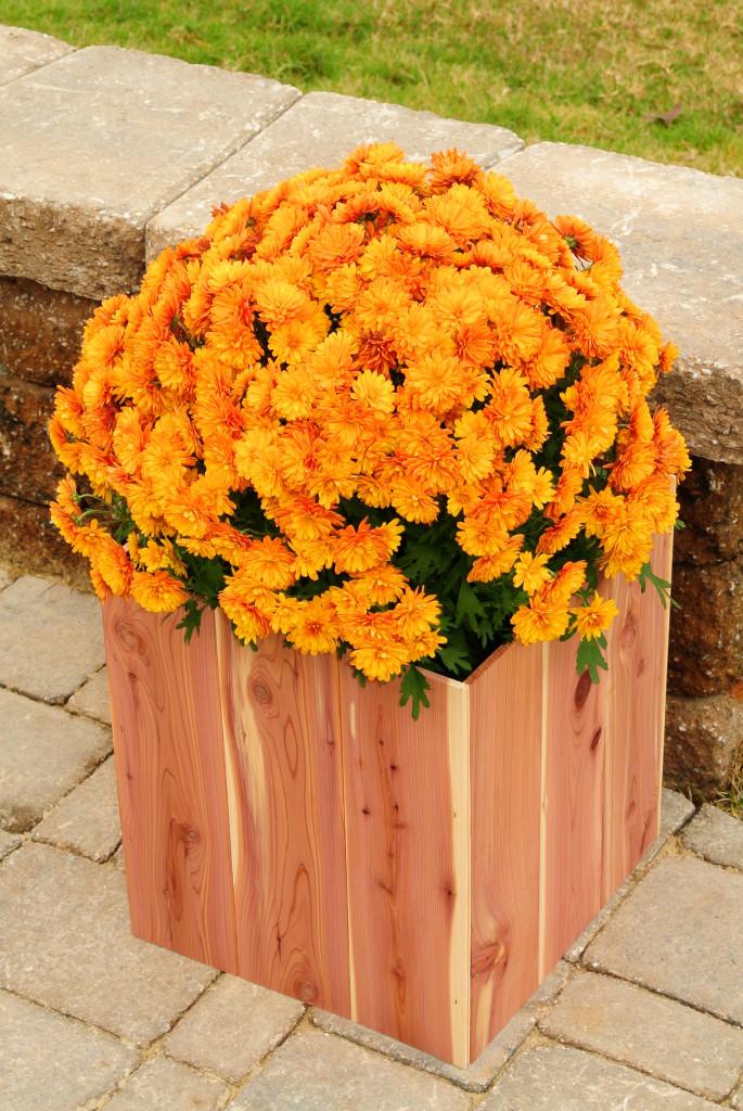 Fall Planter Box